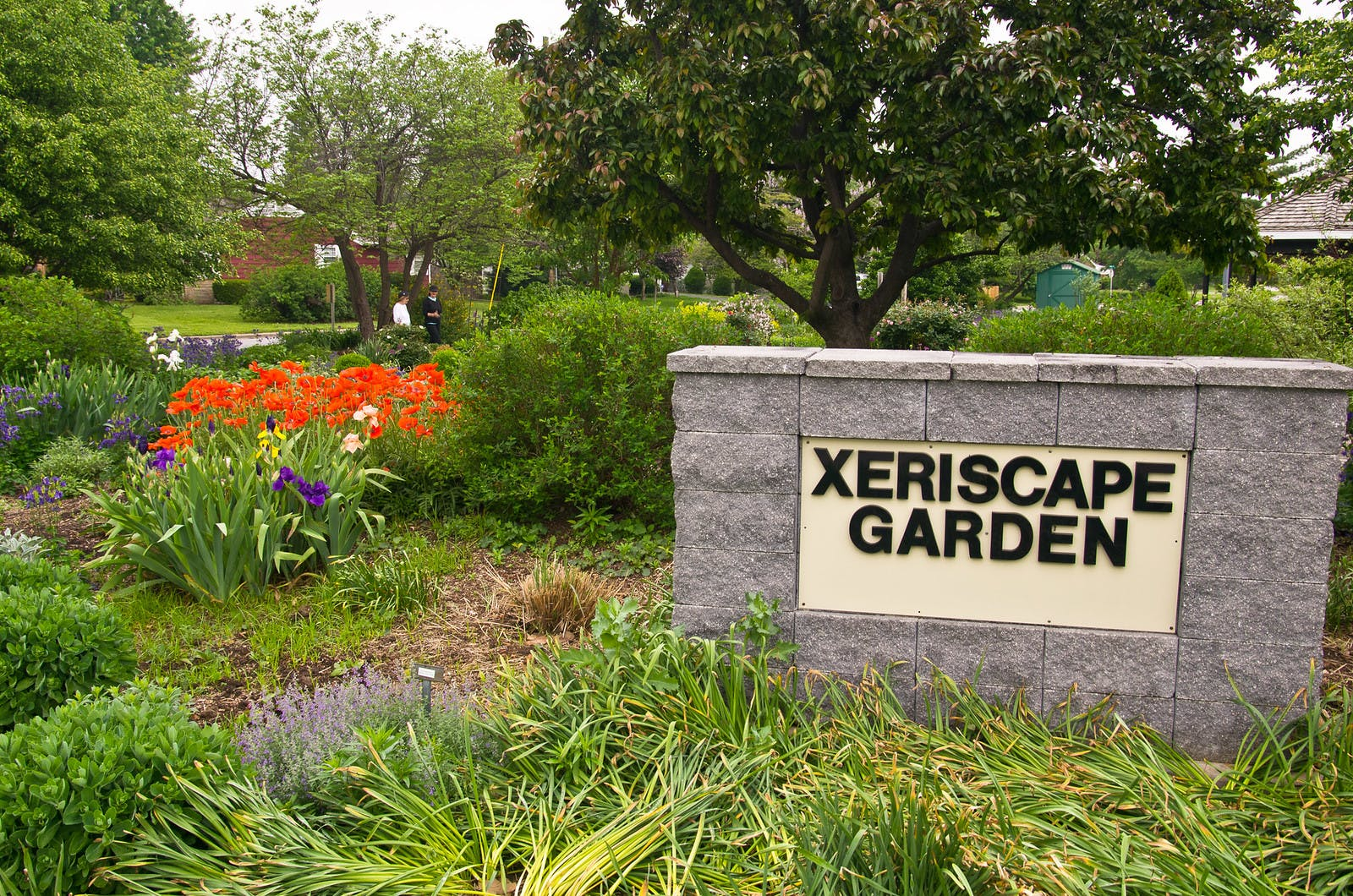 Water Wise Xeriscape Garden