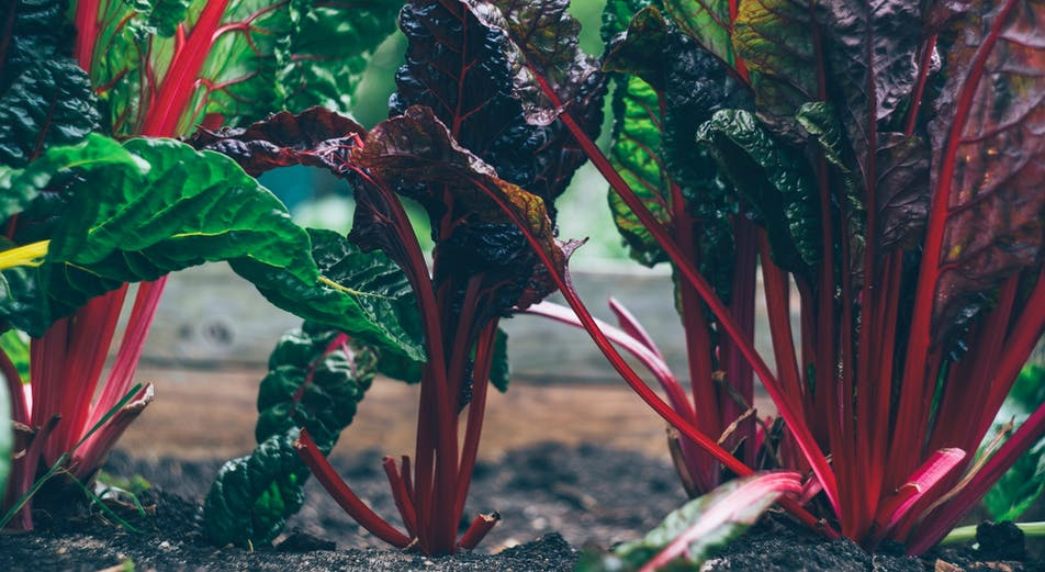 Kasvata lavakauluksessa – näin teet oman lavakauluksen