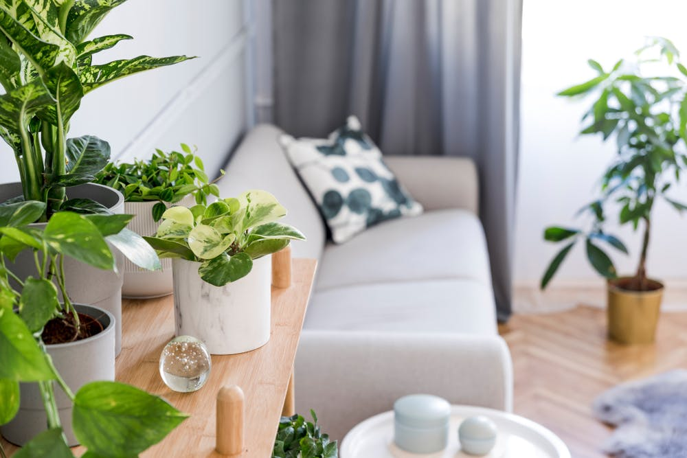 Plante de apartament ușor de îngrijit pentru casa ta