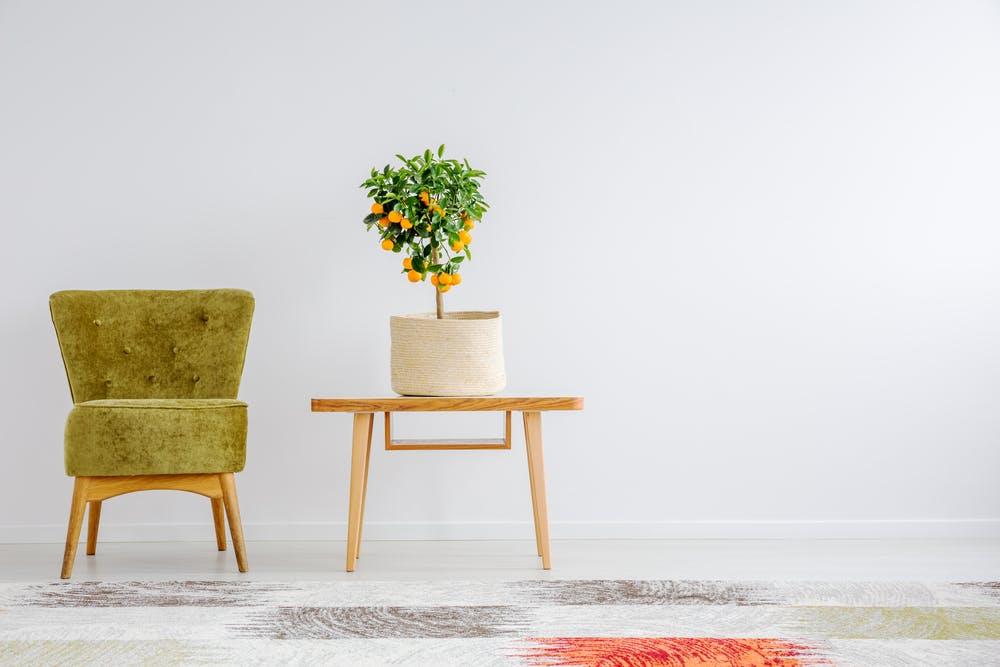 Liana Popa: Schimbă rapid înfățișarea unei camere cu ajutorul plantelor
