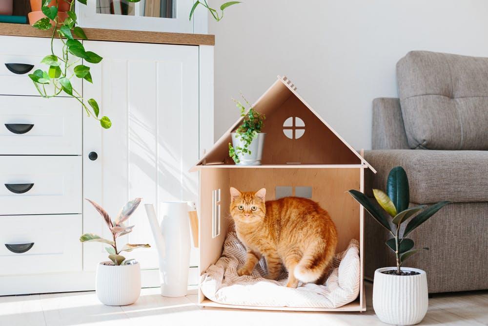 mobila rezistenta pentru animale de companie