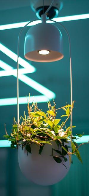 plante de interior iarna