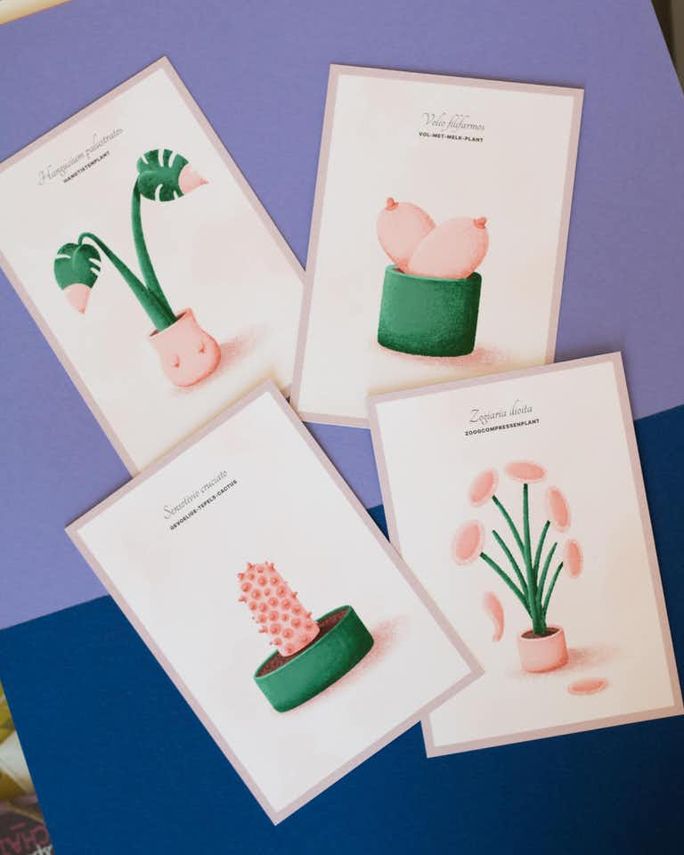 photo of 4 boob plant cards