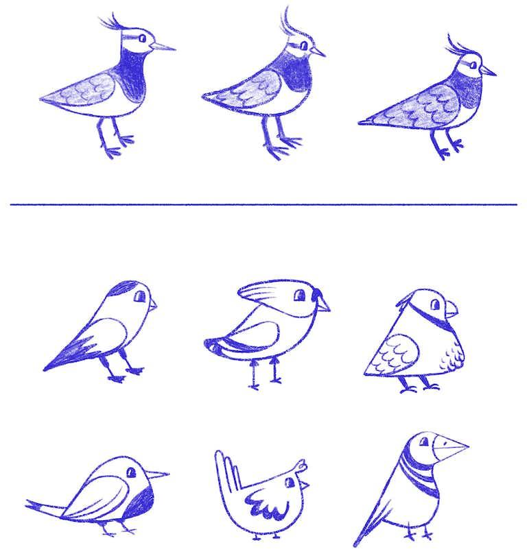 sketches luckybird mascot