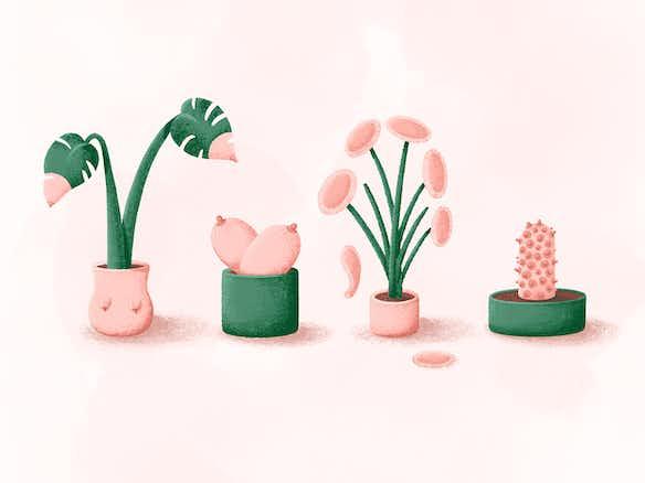 hero image boob plants