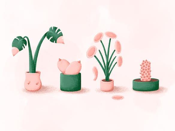 uitgelichte afbeelding tietenplanten stutpak