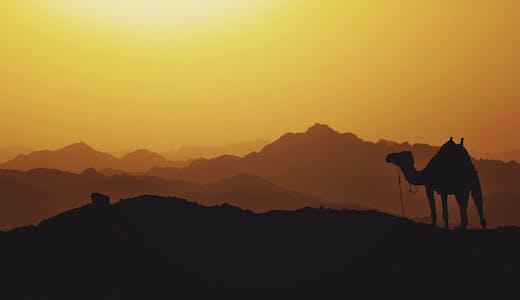 Solnedgång i öknen med vackra färger och en kamel syns till höger i bild.