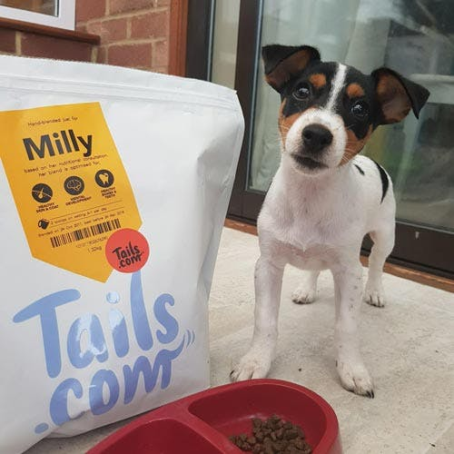 Milly the Jack Russell Terrier's review of tails.com