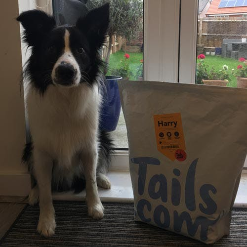 Harry the Border Collie's review of tails.com
