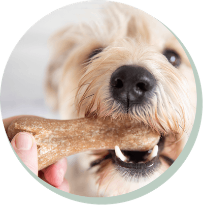dog with Whimzees Rice Bone