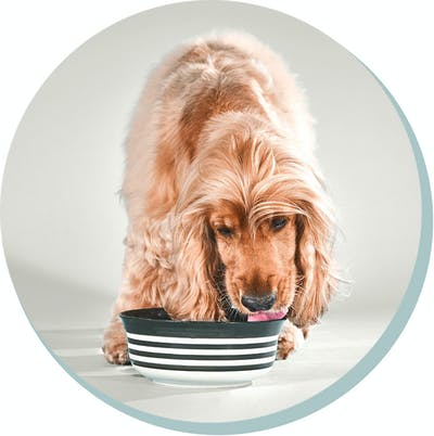 dog eating from a bowl