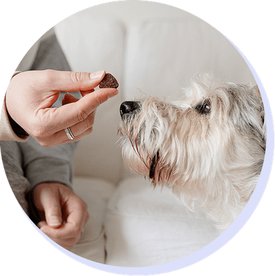 Image of dog and treat