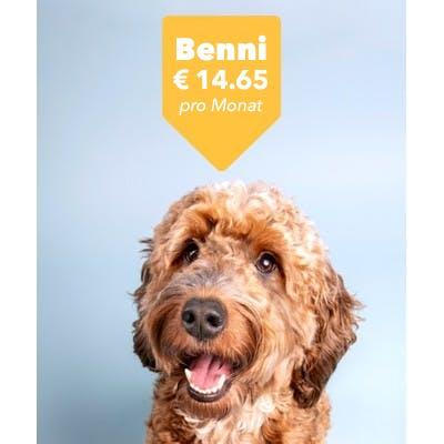 Hund mit Preisschild