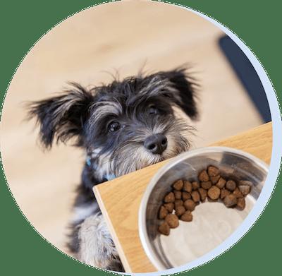 Unser Trockenfutter ist alles, was dein Hund braucht