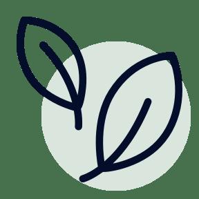 An illustration of a leaf