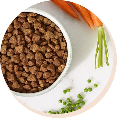 Kibble is king, it's everything your dog needs