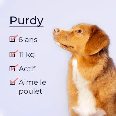 Un chien Purdy