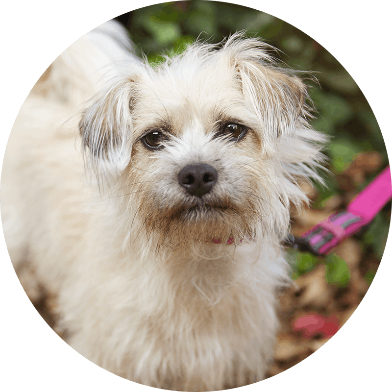 Humbug the Terrier mix