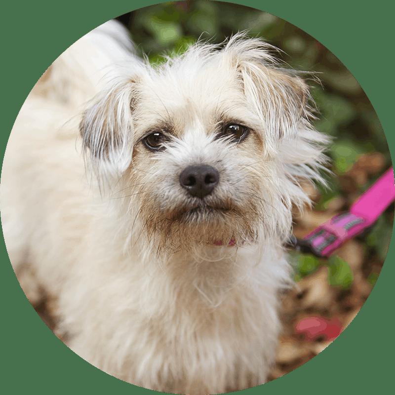 Humbug der Terrier-Mix