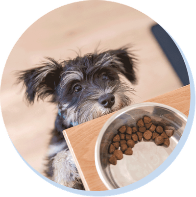 puppy and food bowl