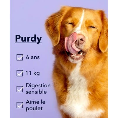 Une photo d'un chien appelé Purdy qui se lèche les lèvres.