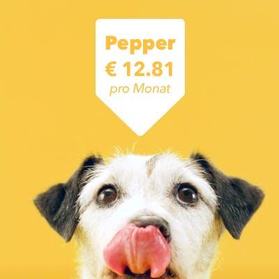 Hund schleckt sich über die Lippen Preisschild