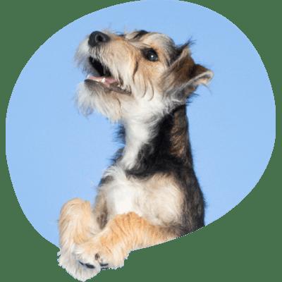 Une image de l'un des chiens de l'équipe de Tails.com appelé Bear.