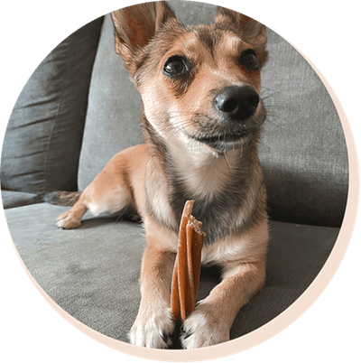 dog with dental chew
