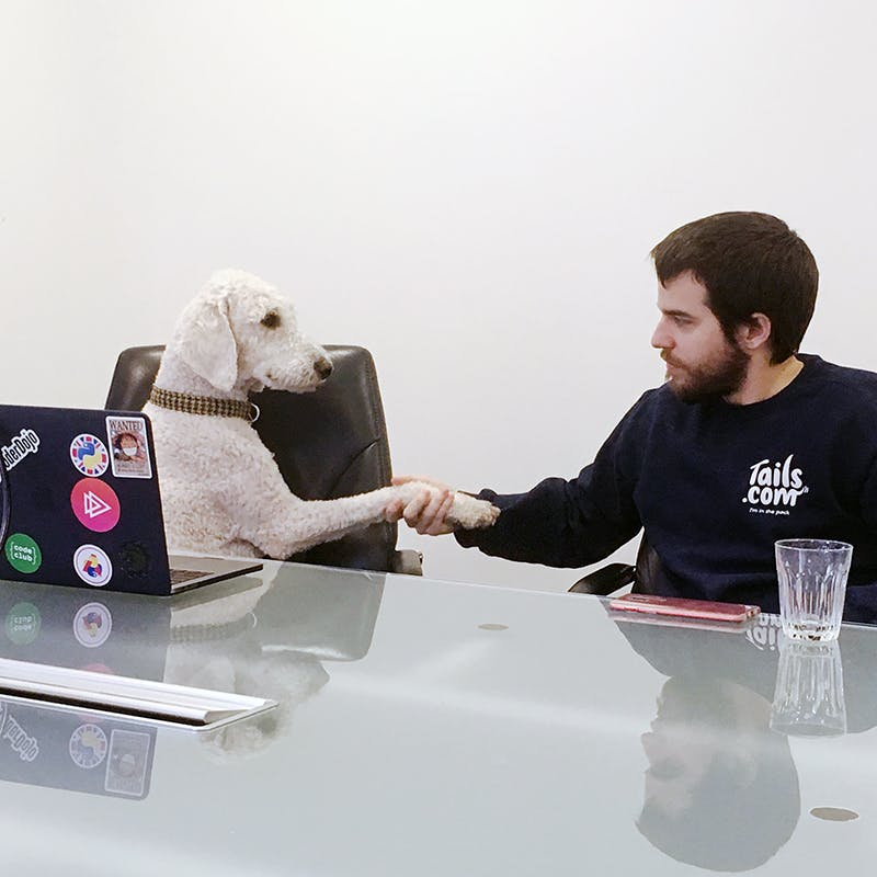 Business Meeting mit einem Hund
