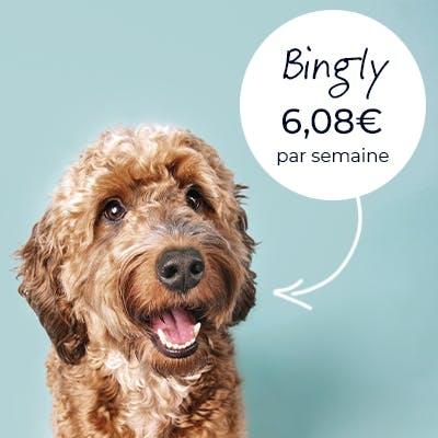 Photo d'un chien appelé Bingly qui a l'air heureux à son prix.