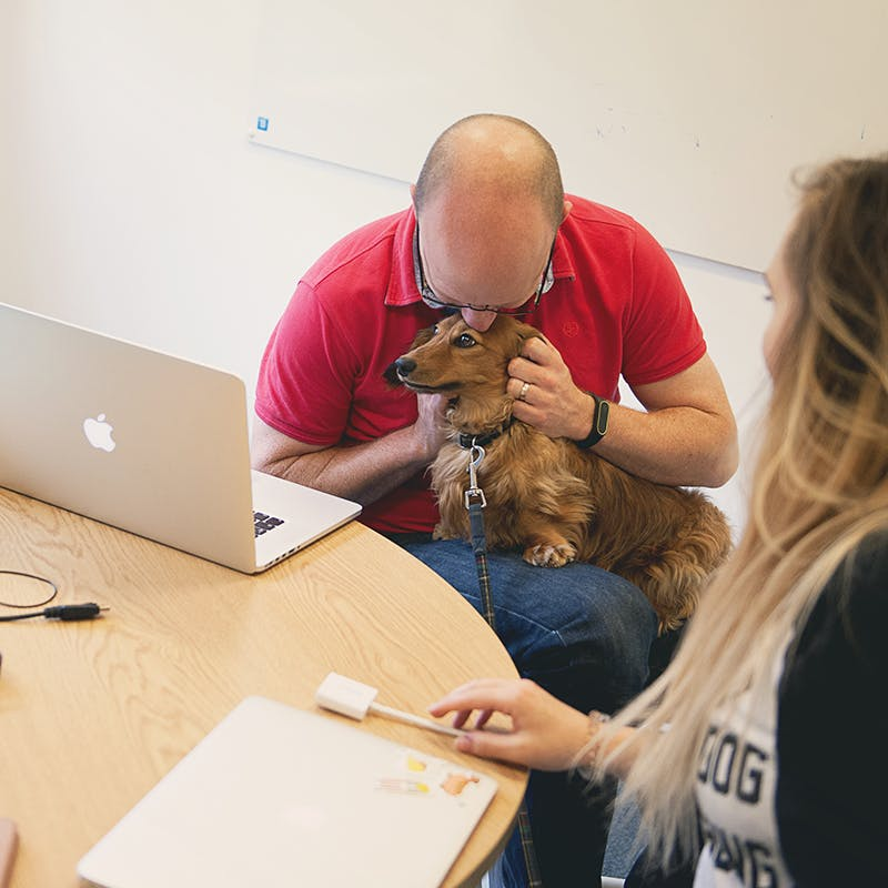 One of our team holding an office dog