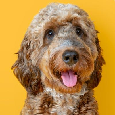 Bingly ist glücklich mit seinem Gelenkpflege-Futter
