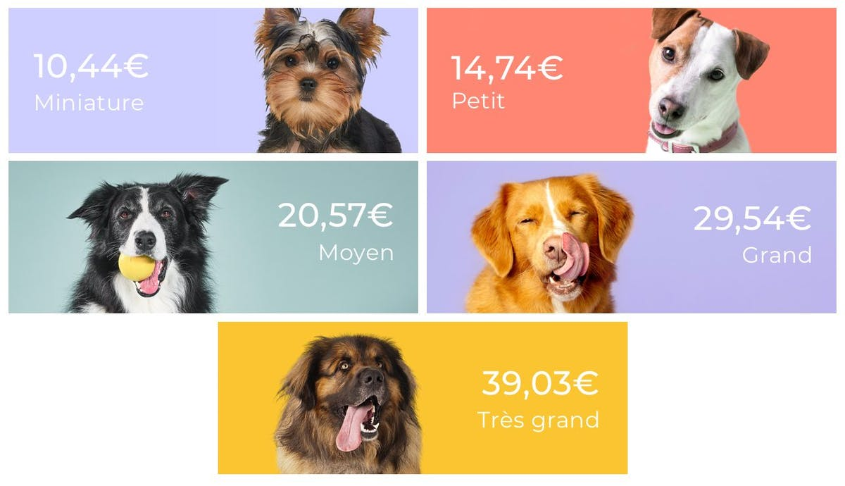price per dog size for tails.com dog food