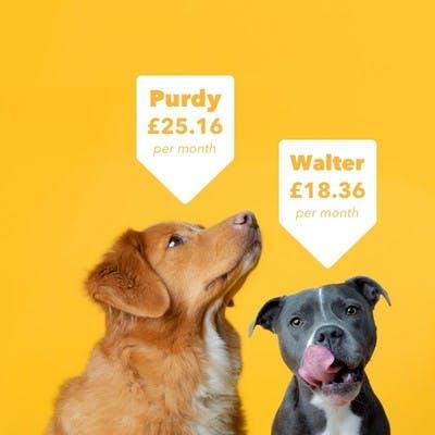 Purdy & Walter