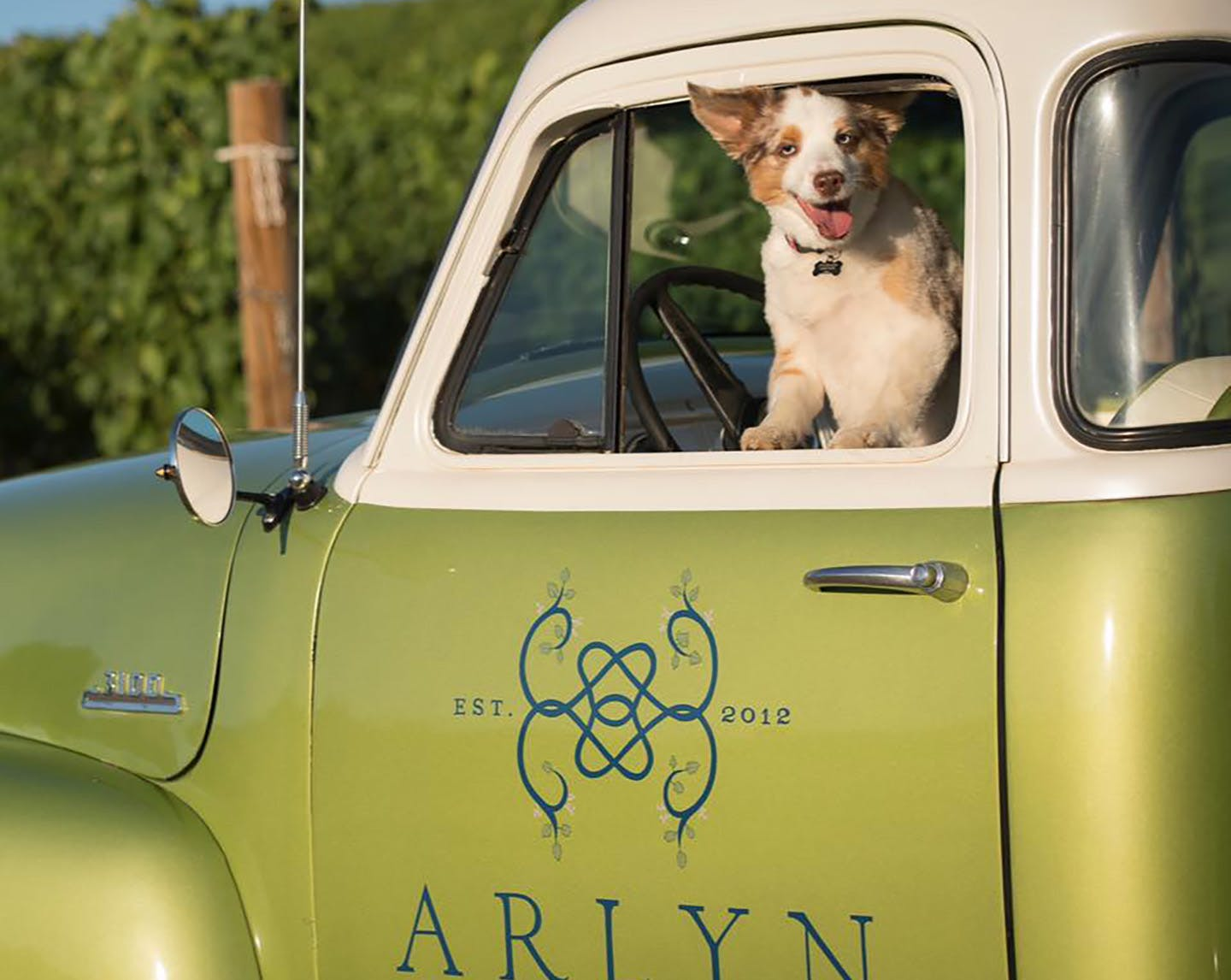 Miss Cooper at Arlyn Vineyards - Newberg, Oregon