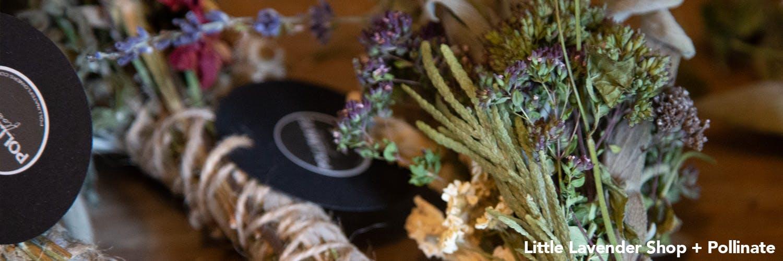 Little Lavender, Pollinate, Wayward Winds Lavender Farm in Newberg, Oregon