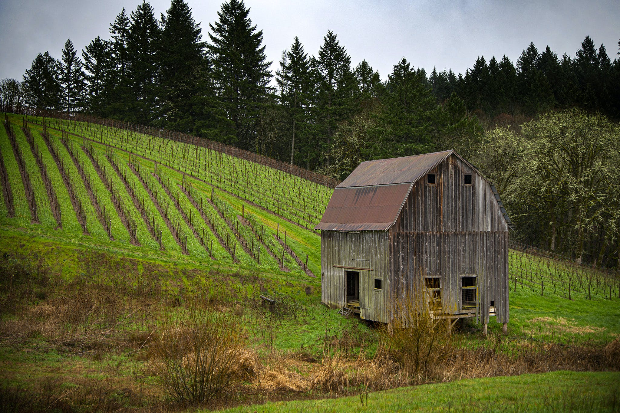 Barn, Farm, Oregon Wine Country, Colene Clemens, Newberg, Getaway