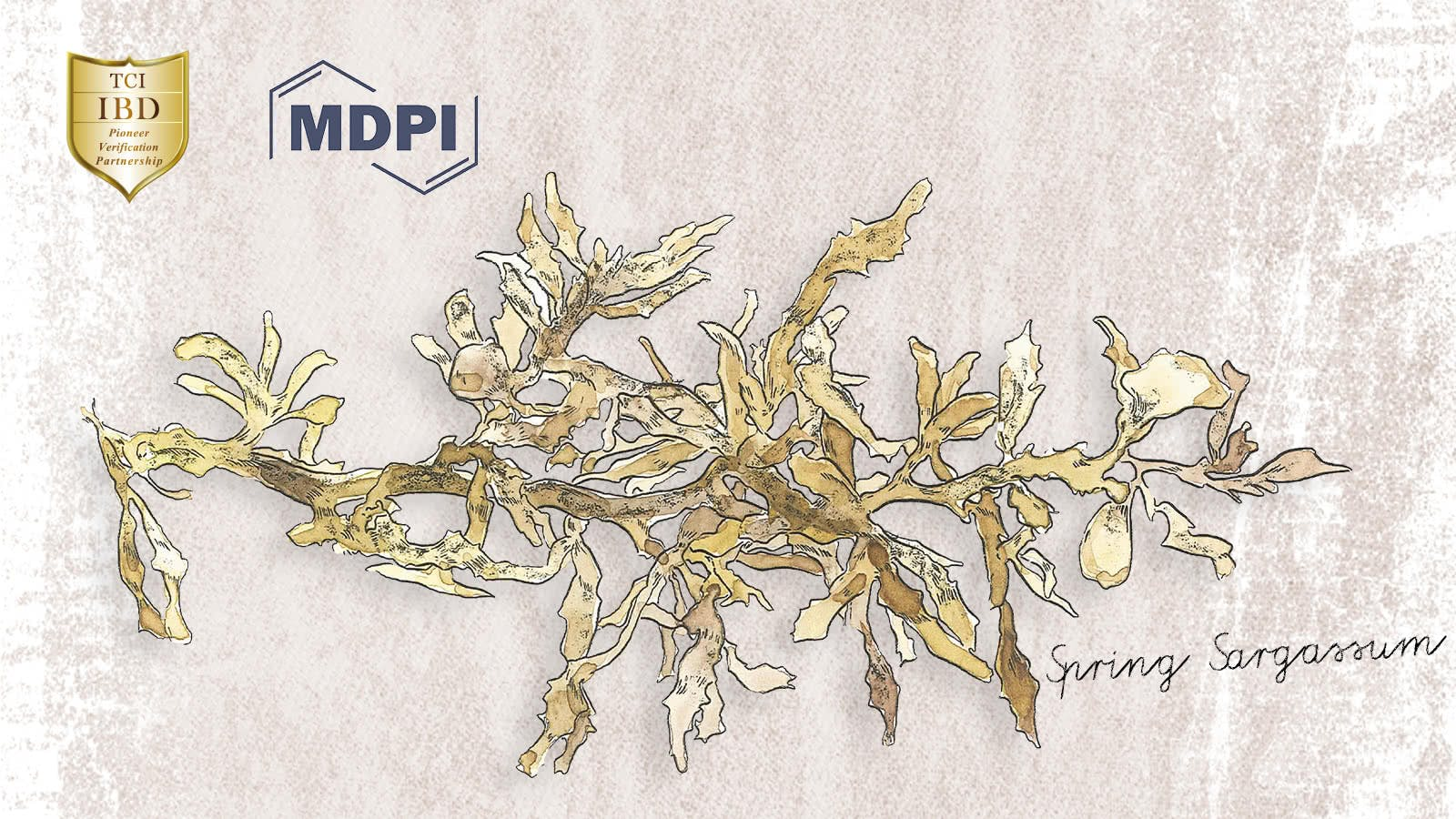 "The article of TCI - ""Spring Sargassum glaucescens Extracts"" has been officially published in MDPI journal"