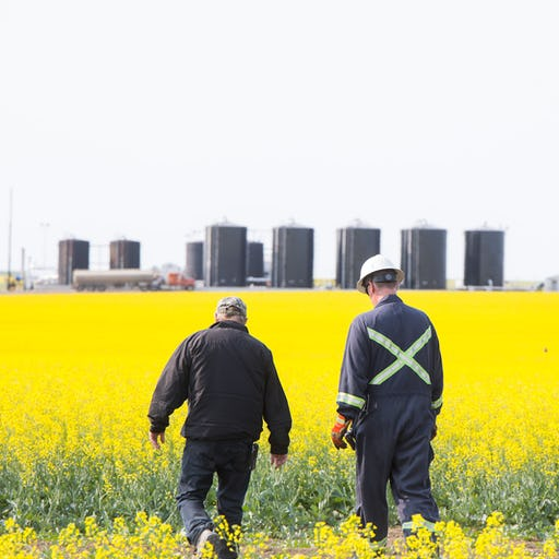 A farmer and an oil worker walk next to each other in a canola field, with an oil rig in the distance.