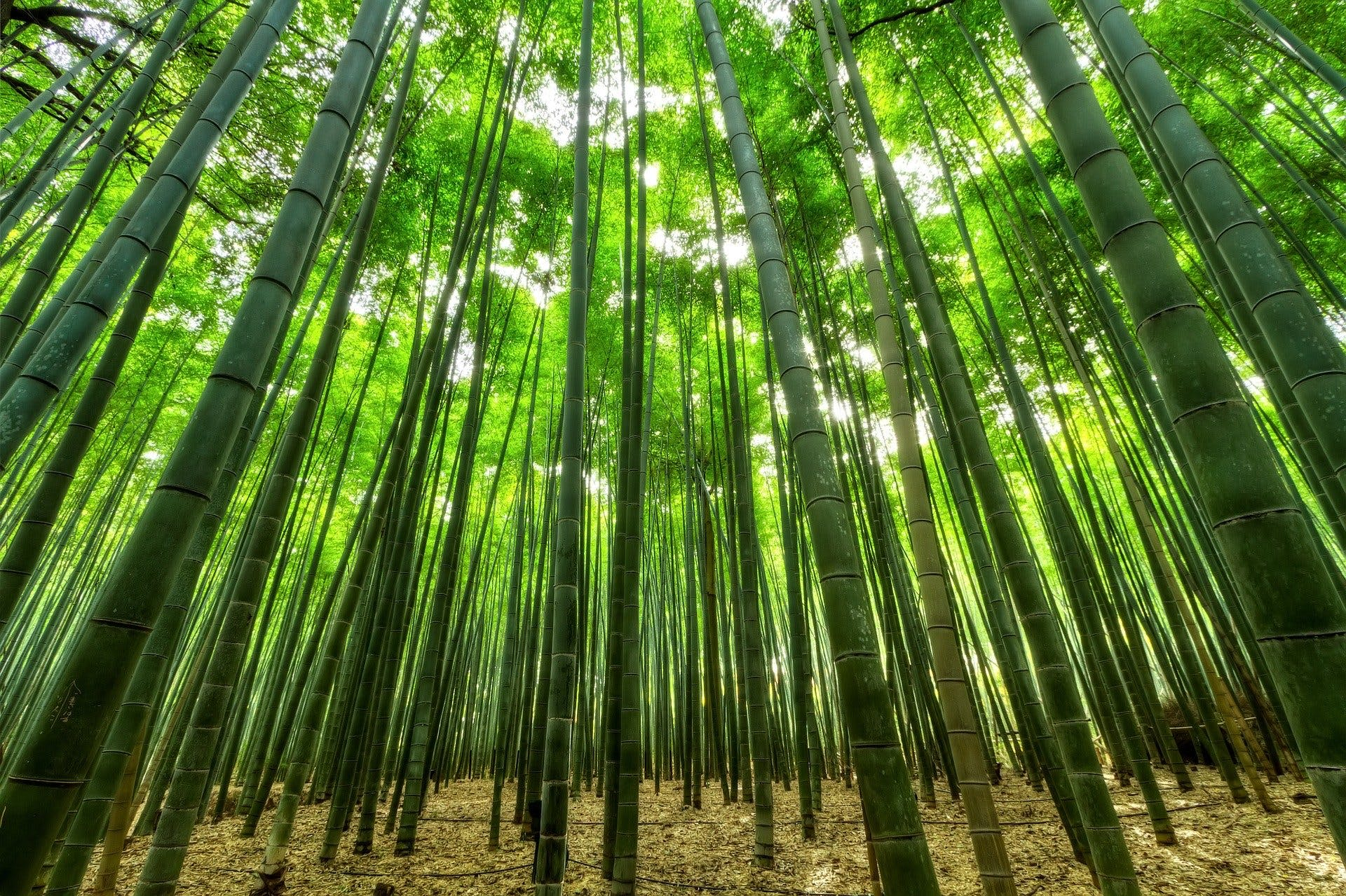 bamboo is a great material to help combat sweaty feet
