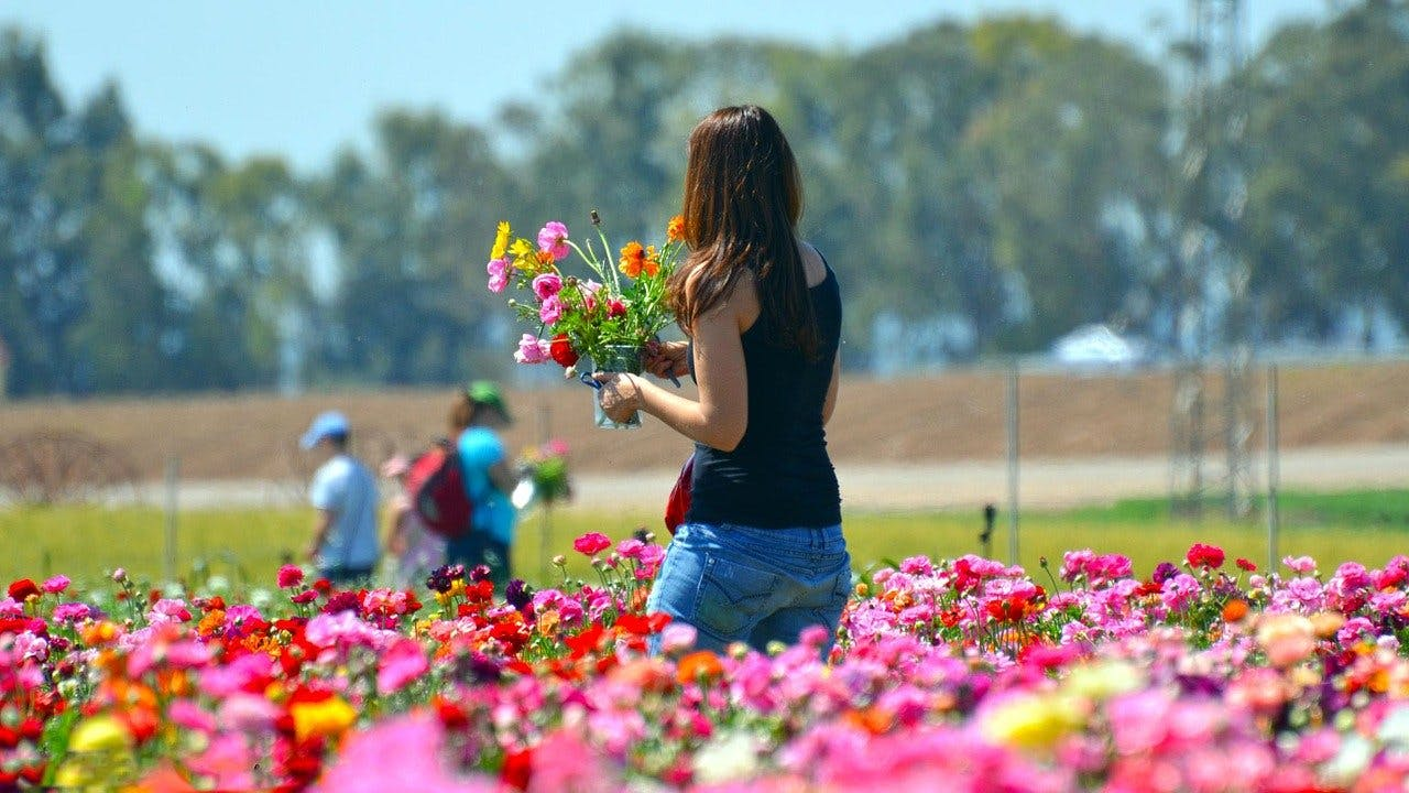 woman picking flowers during warm weather