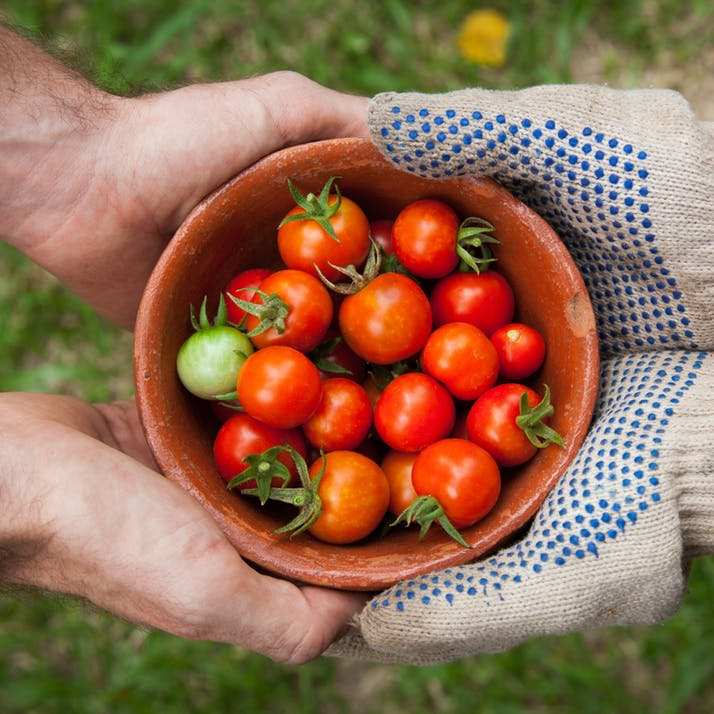 The Case for Farming as an Alternative Treatment for Anorexia