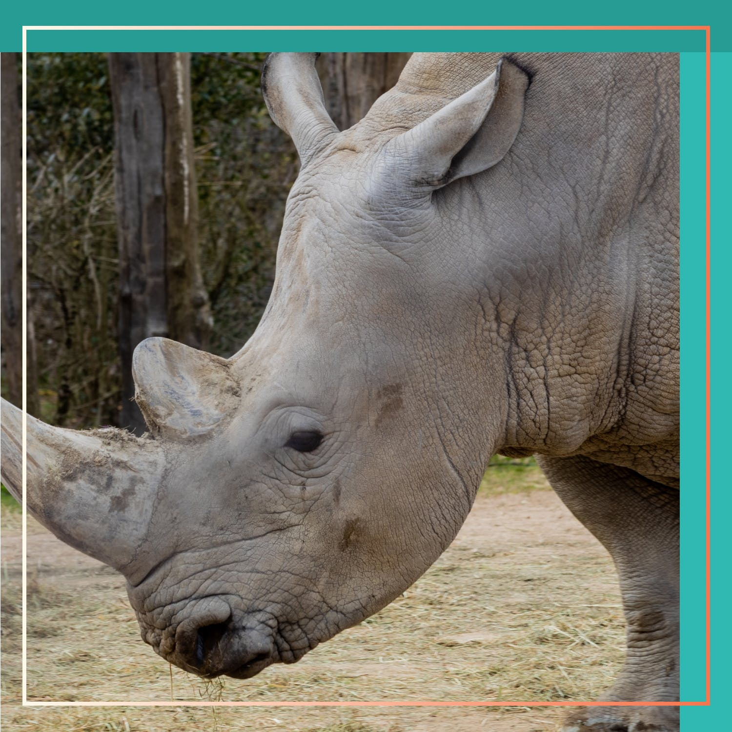 We Must Stop Poachers to Protect Wildlife
