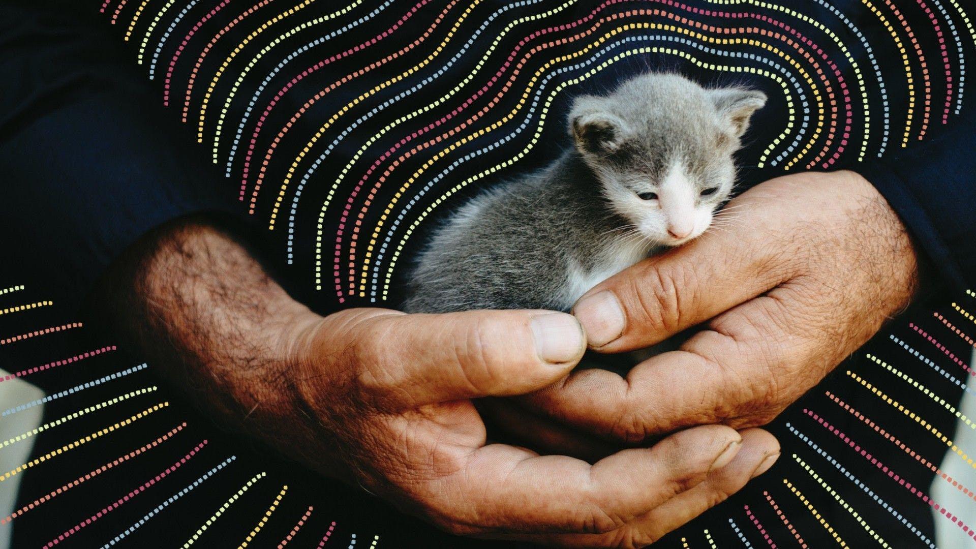 A kittie!