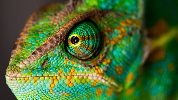 Is chameleon what personality a Are You