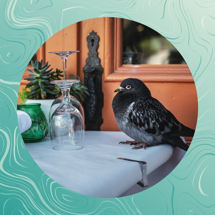 How Eating Pigeons Reduced My Food Carbon Footprint