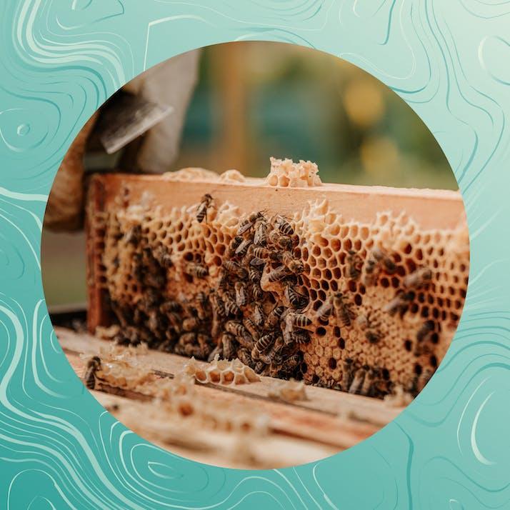 Urban Gleaning: The Backbone of my Beekeeping Business
