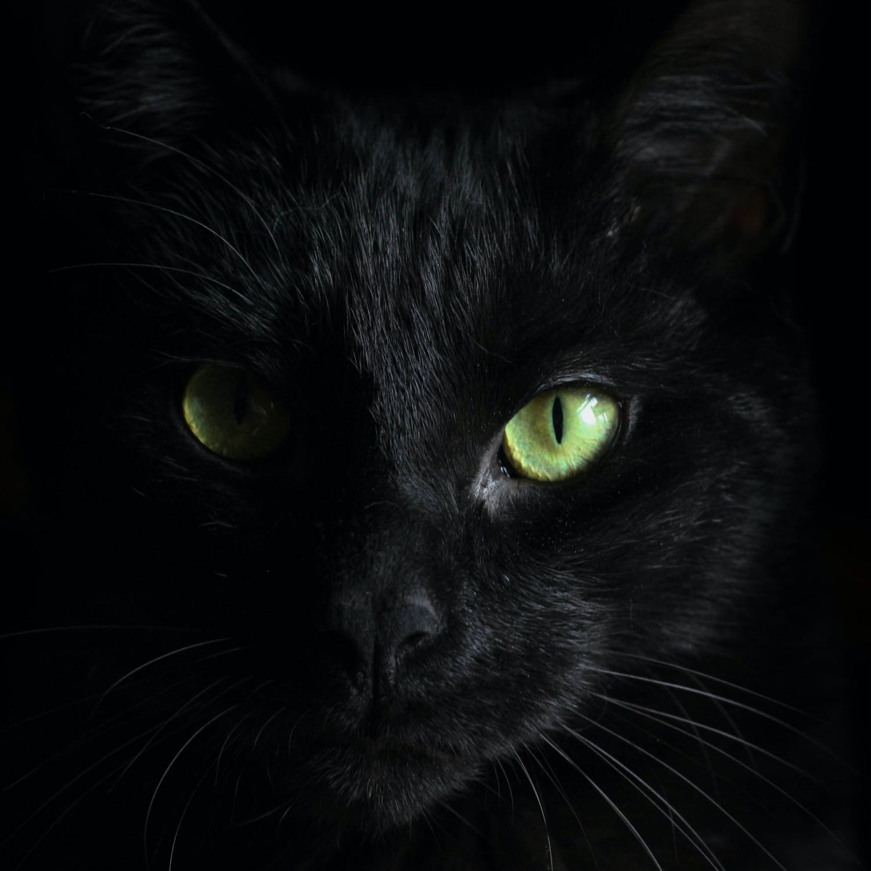 A black cat stares