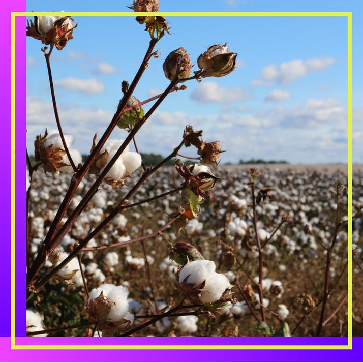 Cotton Is Stained by Slavery's Legacy—So I Threw Out My Cotton Clothes