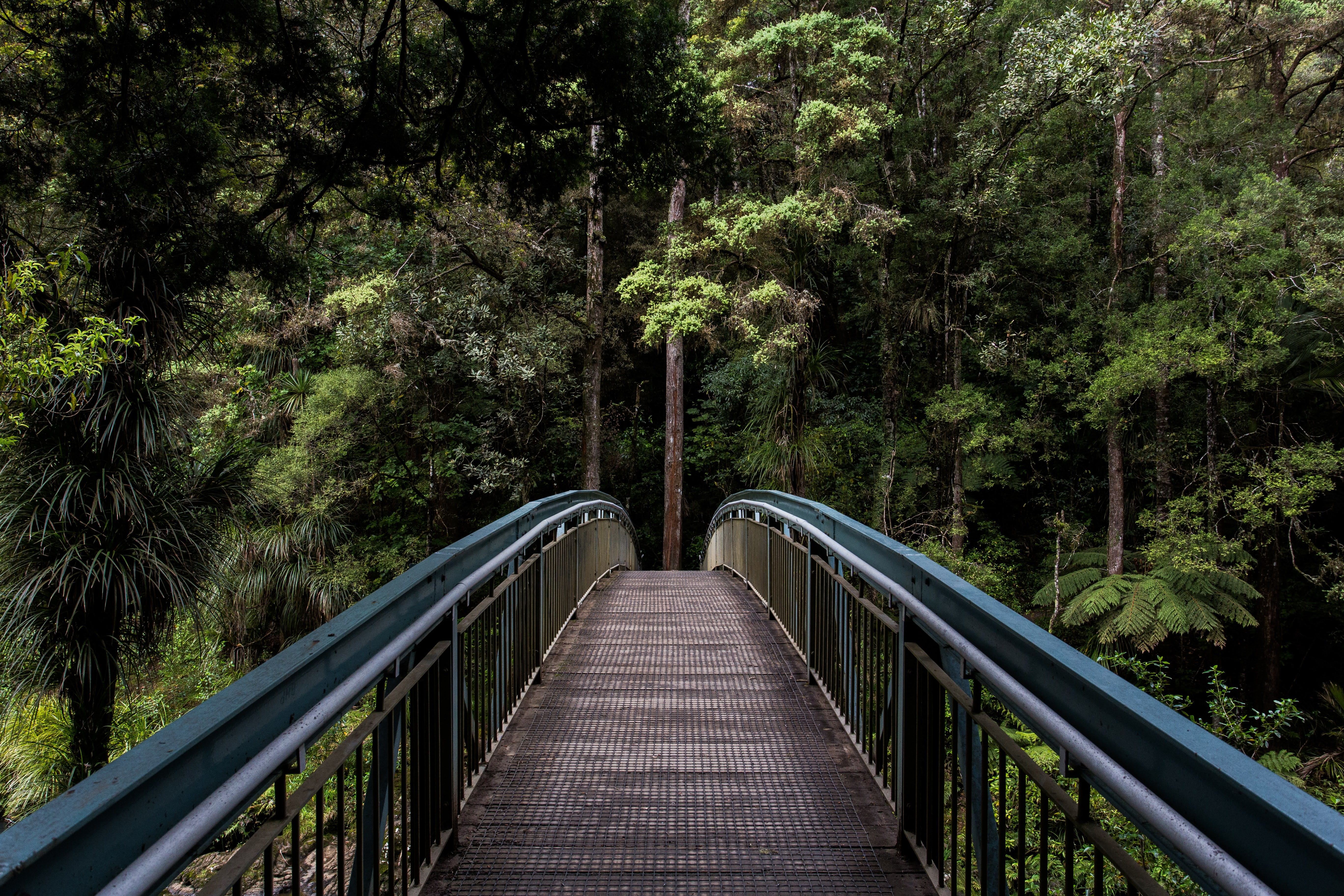 Bridge and a forest